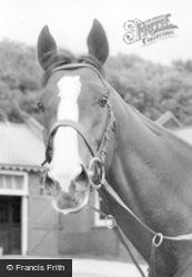 Norton, Horse's Head c.1960, Norton-on-Derwent