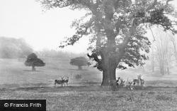 Nottingham, Deer In Wollaton Park 1890