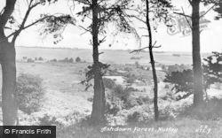 Nutley, Ashdown Forest c.1950