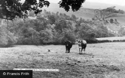 Nutley, Ashdown Forest c.1955