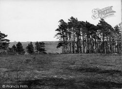 Nutley, Ashdown Forest, The Clump 1928