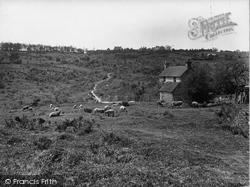 Nutley, Sheep Grazing, Ashdown Forest 1928
