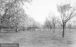 Offham, A Kentish Orchard c.1960