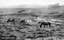 Yes Tor And Dartmoor Ponies c.1930, Okehampton