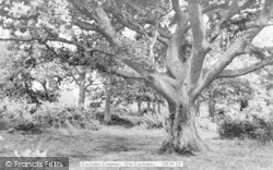 Coulsdon Common c.1960, Old Coulsdon