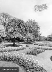 Tulips In Alexandra Park c.1960, Oldham