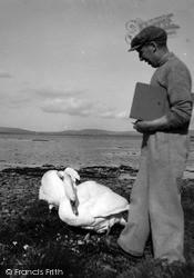 Orkney, Swan's Nest, Unstan c.1955, Orkney Islands