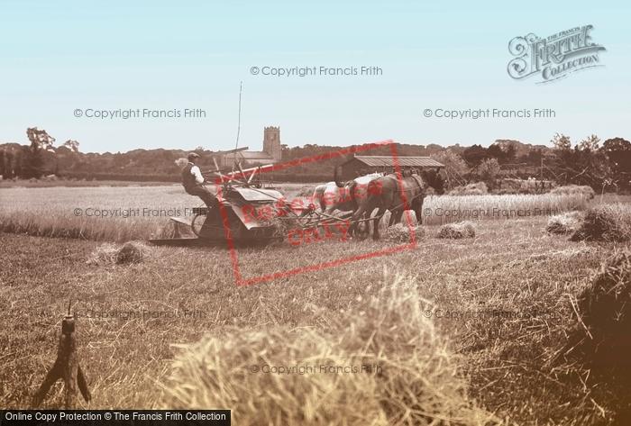 Ormesby St Margaret, Harvest Time c.1930
