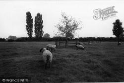 Orsett, c.1960