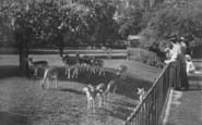 Oxford, The Deer Park, Magdalen  College 1890