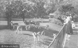 Oxford, The Deer Park, Magdalen  College 1890