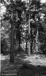 Oxshott, Heath, The Pines c.1955