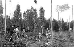 Paddock Wood, Hop Picking c.1950