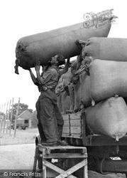 Paddock Wood, Man Loading The Hops c.1950