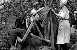 Paddock Wood, Measuring The Hops c.1950