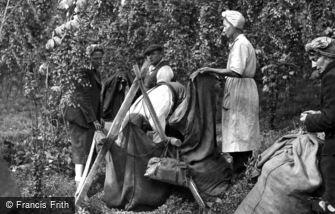 Paddock Wood, Measuring the Hops c1950