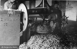 Paddock Wood, Pressing The Hops c.1950