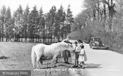 Pagham, Feeding Time c.1955