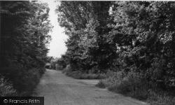 Pagham, Sea Lane c.1955