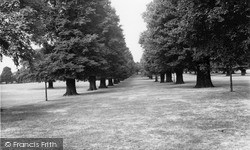 Palmers Green, Broomfield Park, Avenue Of Elms c.1965