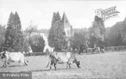 Cattle By St David's Church c.1935, Pantasaph