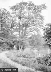 Peats Wood, 1911