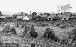 Pringleton, Harvest Field c.1955, Penpont