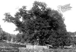 Penshurst, The Park, The Sidney Oak 1891