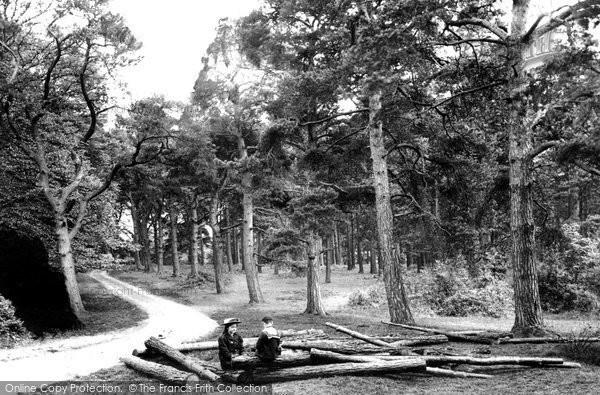 the royal oak launceston gig guide