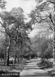 Admirals Walk c.1955, Pirbright