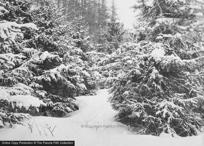 Photo of Pontresina, Snowy Trees c.1937