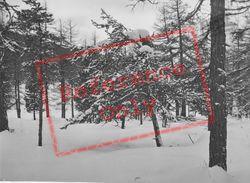 Snowy Trees c.1937, Pontresina
