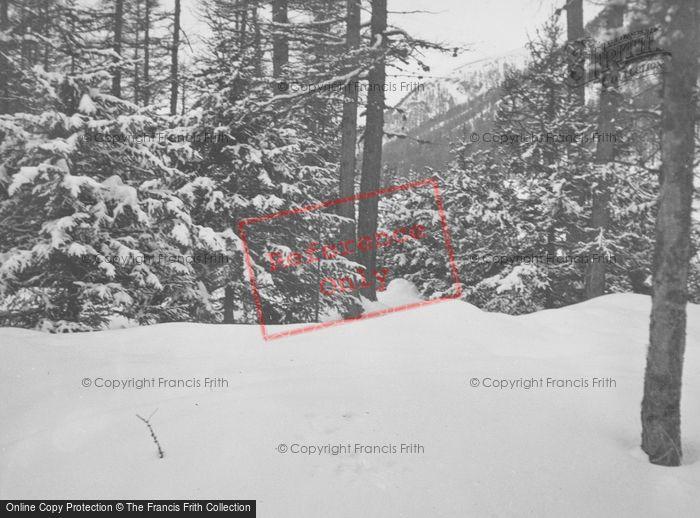Photo of Pontresina, Snowy Woods c.1937