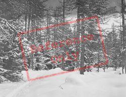 Snowy Woods c.1937, Pontresina