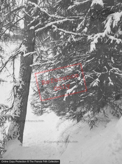 Photo of Pontresina, Tree In The Snow c.1937