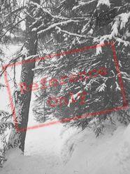 Tree In The Snow c.1937, Pontresina