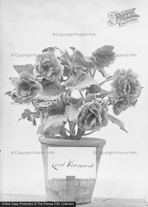 Photo of Portraiture, Flowers In A Pot Labelled Lord Kinnaird c.1895