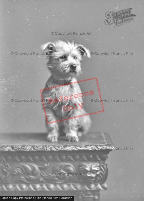 Photo of Portraiture, Mccall c.1890