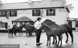 Princetown, Dartmoor Ponies c.1965
