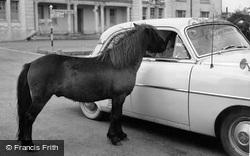 Dartmoor Pony c.1960, Princetown