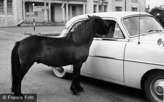 Princetown, Dartmoor Pony c1960