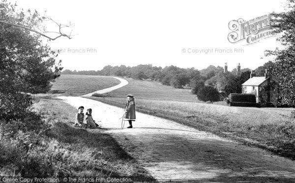 Photo of Ranmore Common, 1906