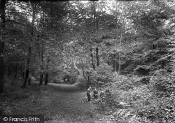 Ranmore Common, In The Woods 1906