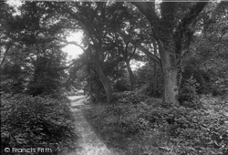 Ranmore Common, In The Woods 1932