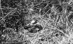 Ravenglass, Seagull's Nest c.1955