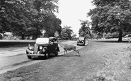 Richmond, the Park c1955