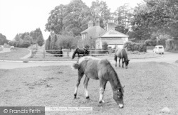 Ringwood, New Forest Ponies c.1965