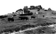 Rodborough, Common c1960