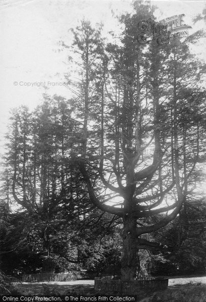 Photo of Rosneath, Adam And Eve 1904