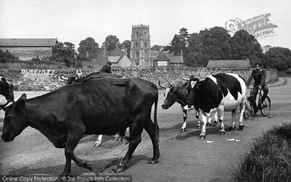 Photo of Rothley, Milking Time c.1955